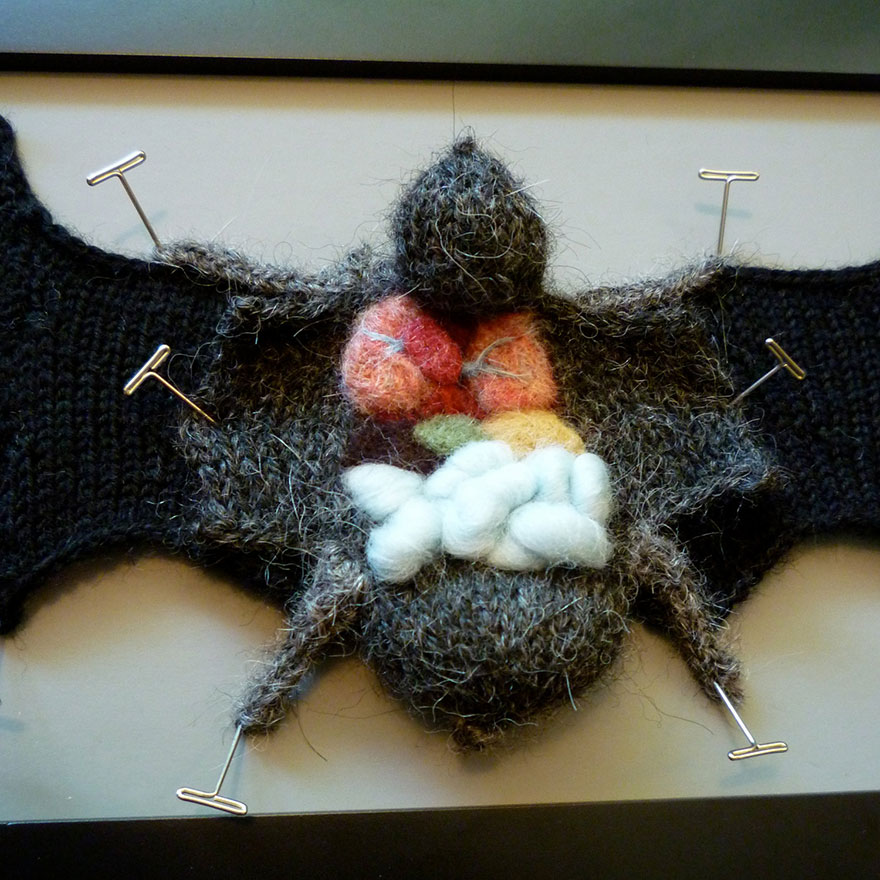 knit-animal-dissection-anatomy-emily-stoneking-aknitomy-13