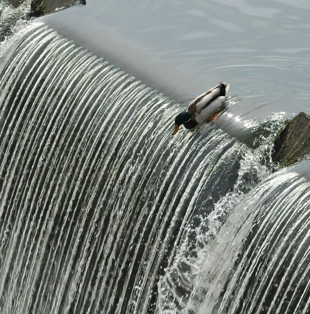 perfectly-timed-photos-4-25__605