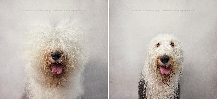 animal-portraits-dry-wet-dog-serenah-hodson-4