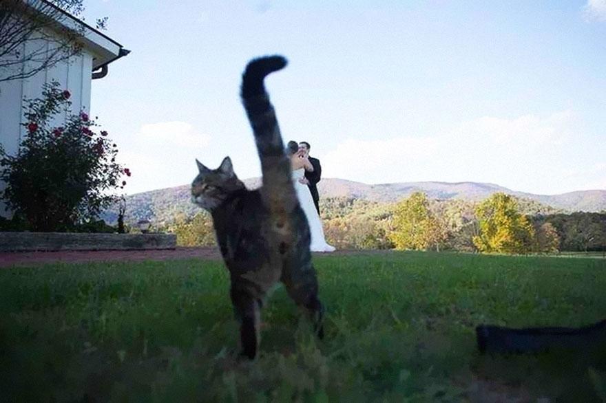 funny-animal-photobombs-17__880