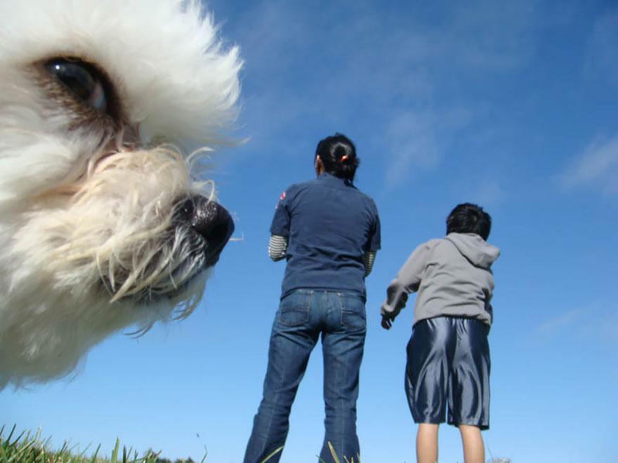 funny-animal-photobombs-25__880