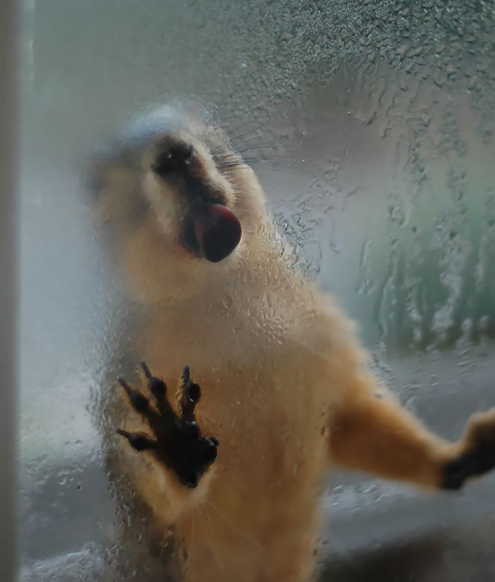funny-animals-licking-glass-6__700
