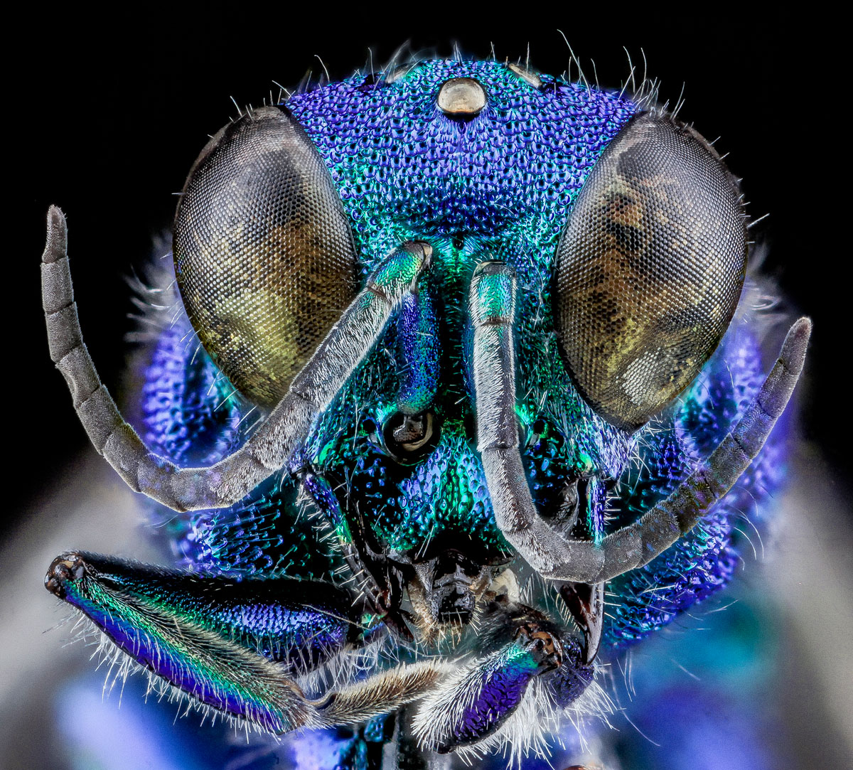 close-ups-of-insect-eyes-by-usgs-biml-1