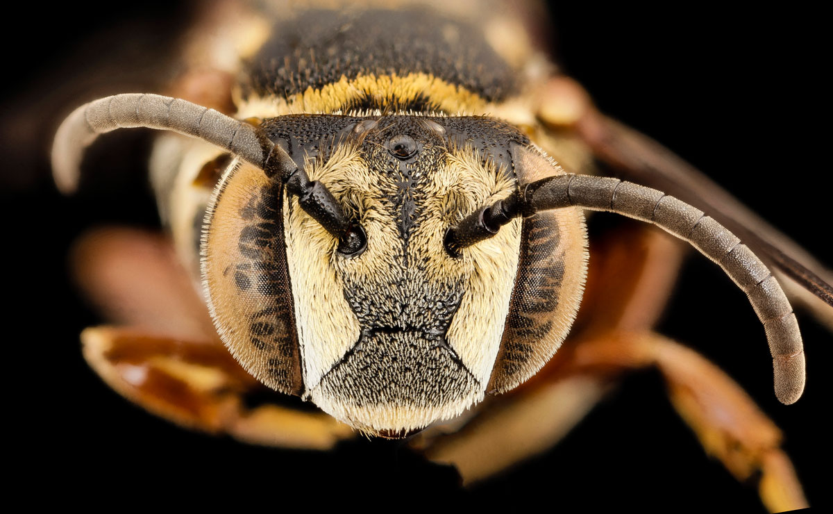 close-ups-of-insect-eyes-by-usgs-biml-13