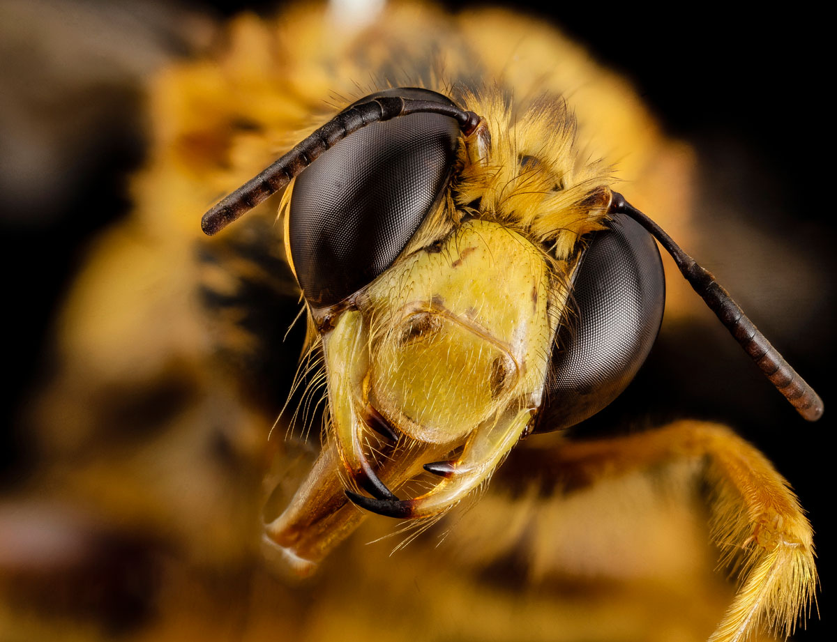 close-ups-of-insect-eyes-by-usgs-biml-15
