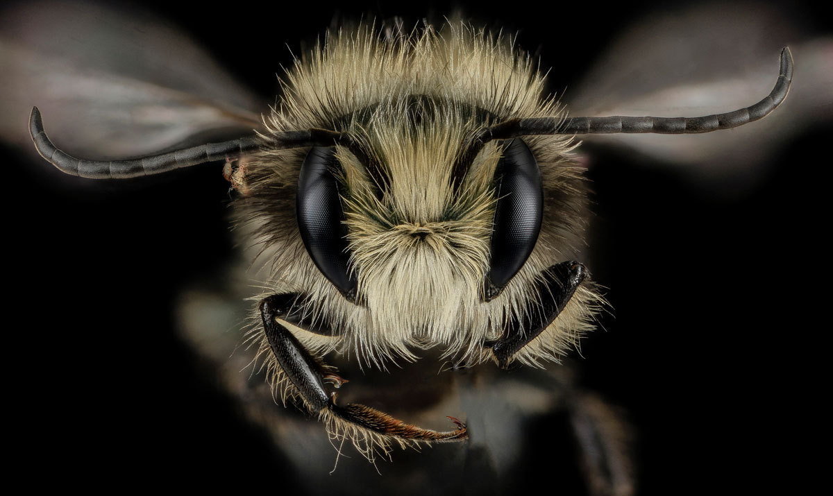close-ups-of-insect-eyes-by-usgs-biml-16