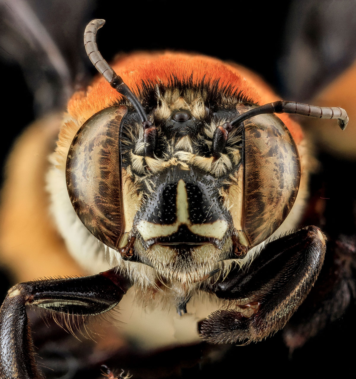 close-ups-of-insect-eyes-by-usgs-biml-18