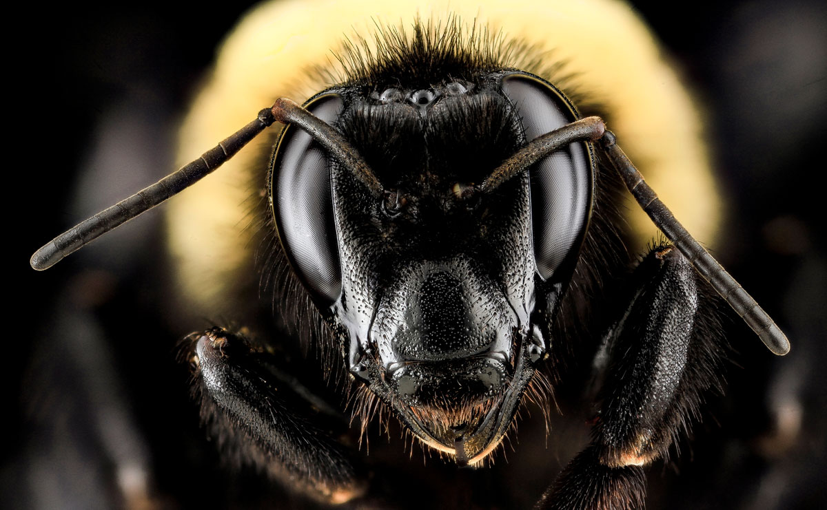 close-ups-of-insect-eyes-by-usgs-biml-8