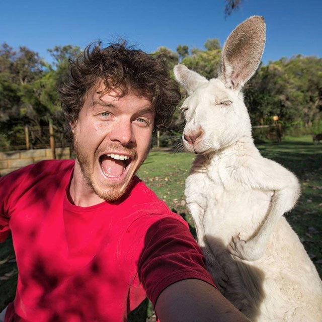 allan-dixon-animal-selfies-4