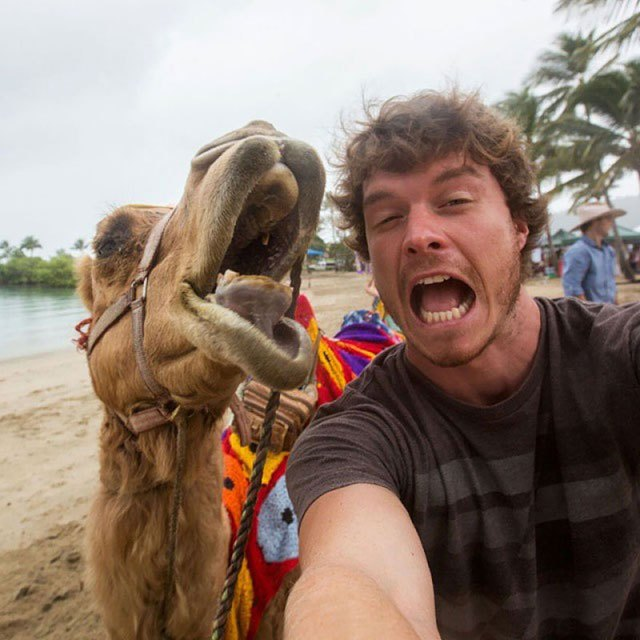 allan-dixon-animal-selfies-9