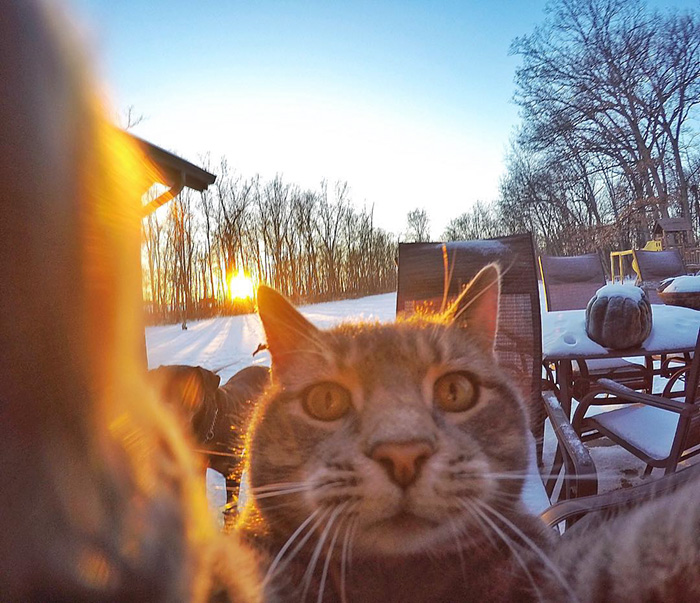 manny-cat-takes-selfies-dogs-gopro-1