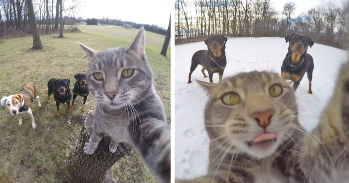 manny-cat-takes-selfies-dogs-gopro-fb__700-png