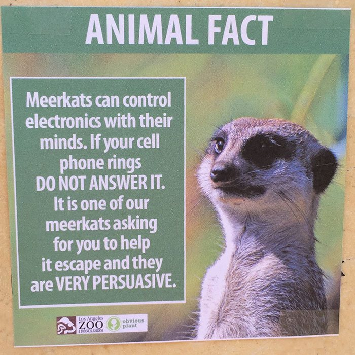funny-animal-facts-fake-los-angeles-zoo-obvious-plant-4-5776744320022__700
