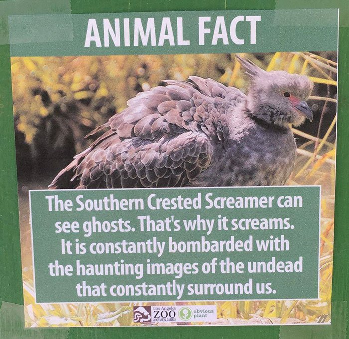 funny-animal-facts-fake-los-angeles-zoo-obvious-plant-5-57767446233fe__700