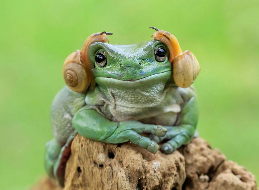 indonesian photographer takes spectacular photos of frogs artfido