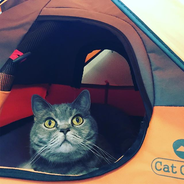 25a63cf234 Australian company Cat Camp have designed the purrfect kitty hideaway in  the form of a cat-sized camping tent.