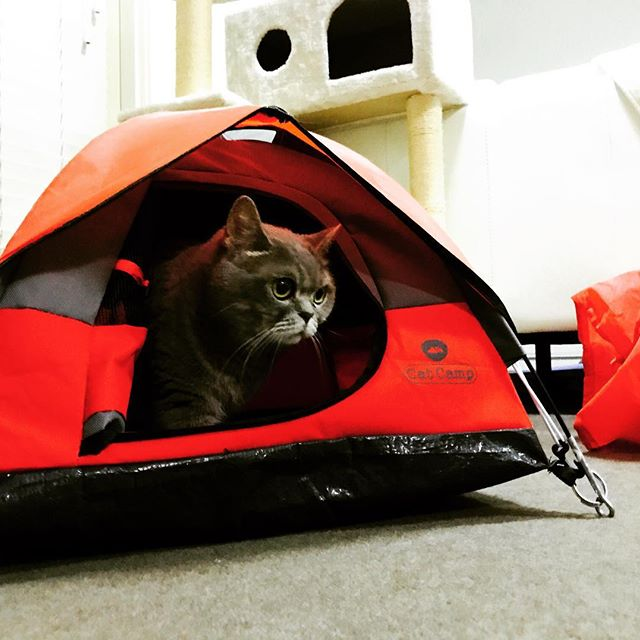 041d62a6ef Cat Lover s Rejoice  There s Now A Mini Camping Tent Purrfect for ...