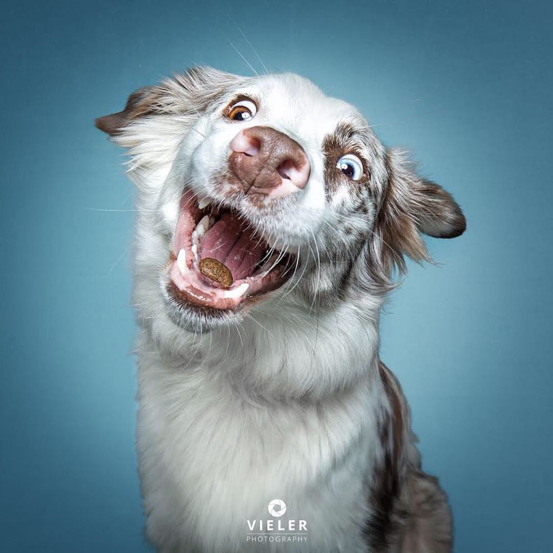 Hilarious Photos of Dogs Concentrating on Catching Treats ...