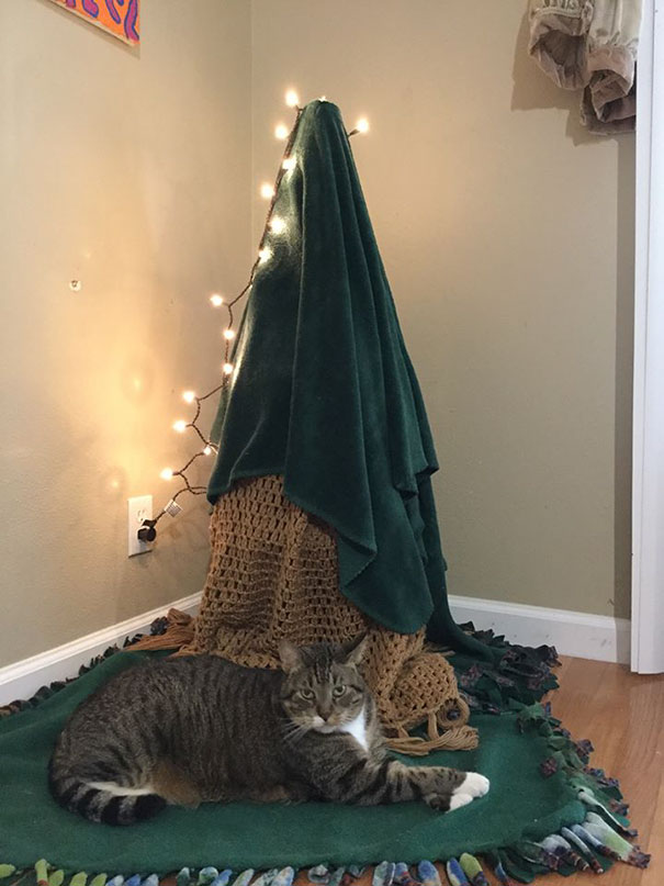 Cat Proof Christmas Tree.Genius Humans Who Found A Way To Protect Their Christmas