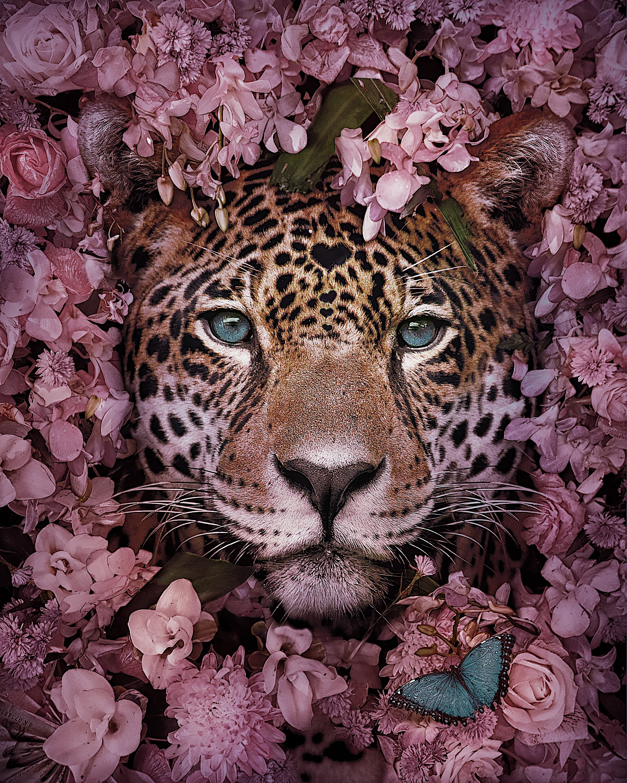 Stunning Animal Portraits By Andreas Häggkvist To Raise Awareness For Endangered Species artFido
