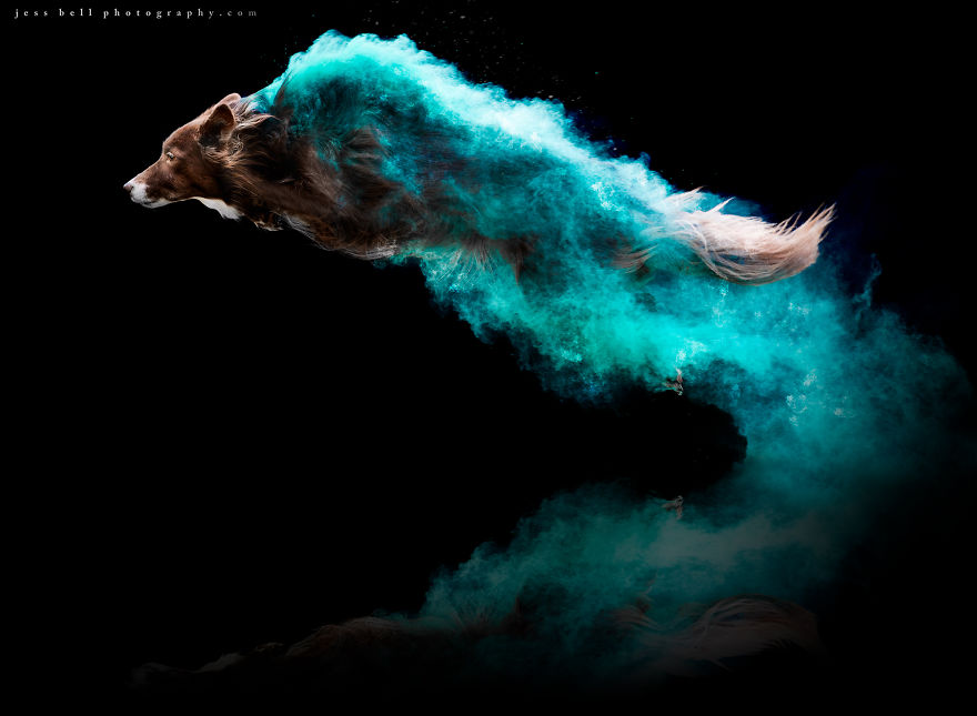 Artist Powders Dogs To Create Amazing Photographs artFido