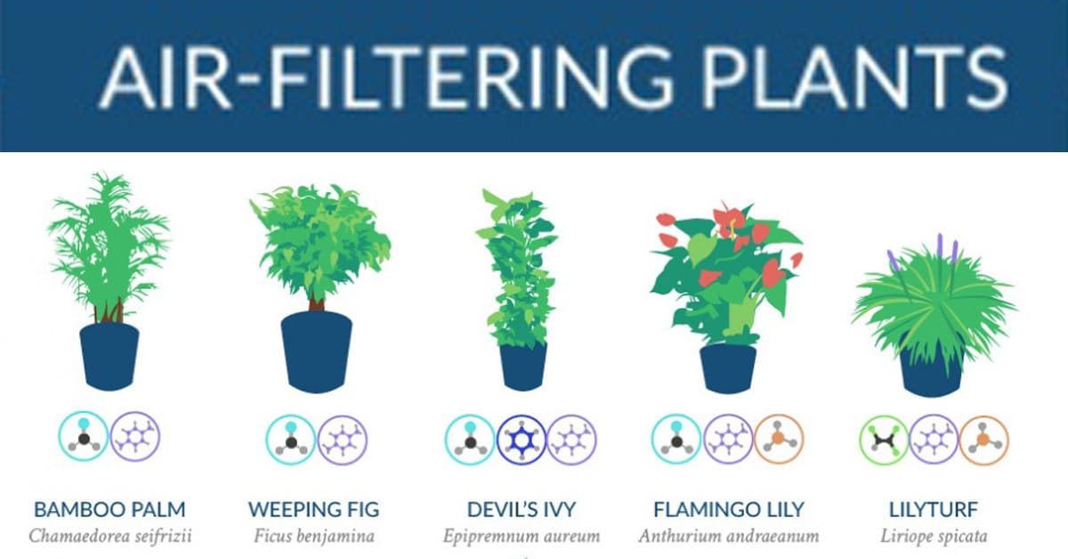 NASA Compiles a List of the Best Air-Cleaning Plants for ... on best mulch for home, best trees for home, best solar system for home, best chairs for home, best pets for home, best fish for home, best dogs for home, best light for home, best flowers for home, best lighting for home, best lucky plant,